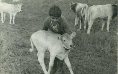 """""""MISS PODOLICA"""", la vitellina più bella sarà scelta dai bambini"""